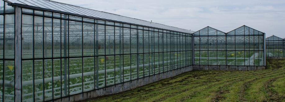 Greenhouses at Anchor Nurseries